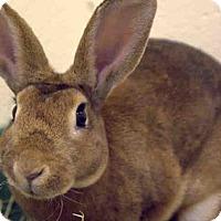 Adopt A Pet :: PACKER - Boston, MA