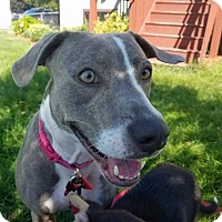 Adopt A Pet :: Patti - Maple Grove, MN
