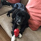 Adopt A Pet :: Tripp