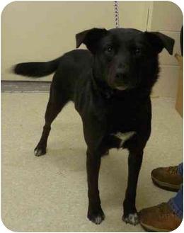 Labrador Retriever Mix Dog for adoption in Jerome, Idaho - 4394