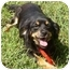 Photo 2 - Cattle Dog Mix Dog for adoption in Osseo, Minnesota - Muffin