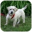 Photo 4 - Terrier (Unknown Type, Small) Mix Dog for adoption in Muldrow, Oklahoma - Jack