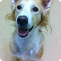 Adopt A Pet :: Trapper - Wasilla, AK