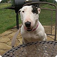 Adopt A Pet :: Mia - Sachse, TX