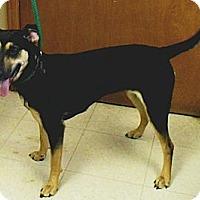 Adopt A Pet :: Sabrina - Washington Court House, OH