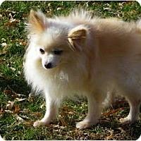 Adopt A Pet :: PIXIE - Hesperus, CO