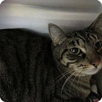 Adopt A Pet :: Trixie - Albany, NY