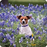 Adopt A Pet :: Austin - Austin, TX