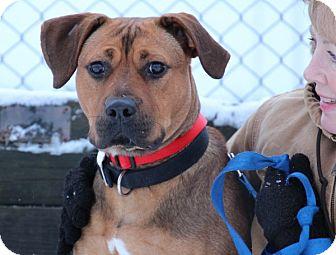 Boxer/Shepherd (Unknown Type) Mix Dog for adoption in Elyria, Ohio - Sadie-Prison Graduate