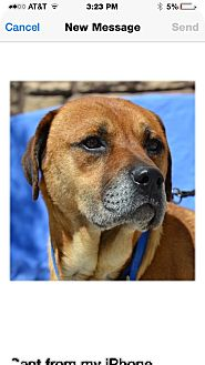 Shepherd (Unknown Type) Mix Dog for adoption in Las Vegas, Nevada - Blaze