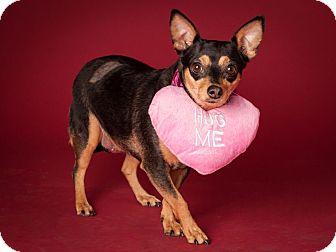 Chihuahua Mix Dog for adoption in Dallas, Texas - Adelita