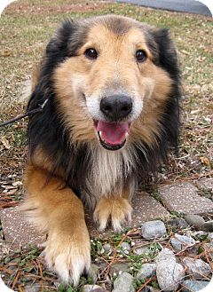 Collie Mix Dog for adoption in Flora, Illinois - Teddy