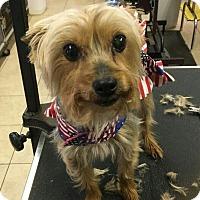 Adopt A Pet :: Sushi - Conroe, TX
