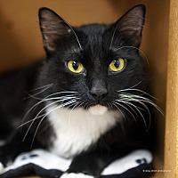 Adopt A Pet :: Leroux - Tucson, AZ