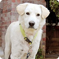 Adopt A Pet :: Keaton - Austin, TX