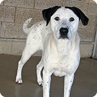 Adopt A Pet :: Daisy - Ruidoso, NM