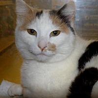 Adopt A Pet :: Remi - Logan, UT