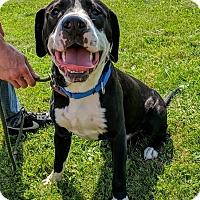 Adopt A Pet :: Stanley - Lisbon, OH