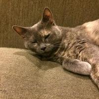 Adopt A Pet :: Betty - Athabasca, AB