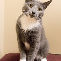 Adopt A Pet :: Ines - Chicago, IL