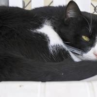 Adopt A Pet :: Remus - Potsdam, NY