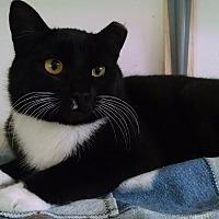 Adopt A Pet :: Tuxy - Colville, WA