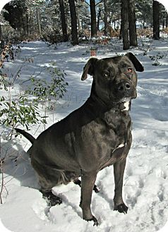 Labrador Retriever Mix Dog for adoption in Forked River, New Jersey - Libby