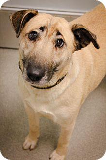 Labrador Retriever Mix Dog for adoption in Columbus, Georgia - Terra 4358