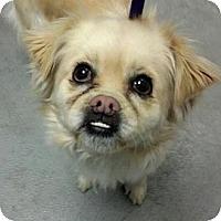 Adopt A Pet :: Roxy - Ogden, UT