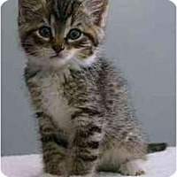 Adopt A Pet :: Seth - Portland, OR