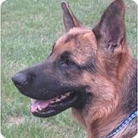 Adopt A Pet :: Ivan - Conyers, GA