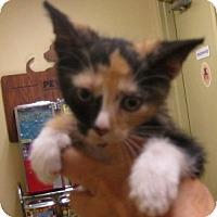 Adopt A Pet :: Trivia - Dallas, TX