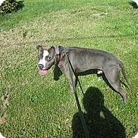 Adopt A Pet :: #201-14  ADOPTED! - Zanesville, OH