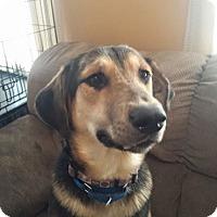 Adopt A Pet :: Pudge - Fayette City, PA