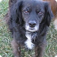 Adopt A Pet :: Lou - Charlottesville, VA