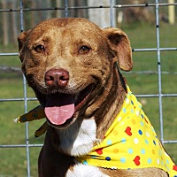Adopt A Pet :: Herman - Simsbury, CT