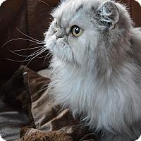 Adopt A Pet :: Princess - Columbus, OH