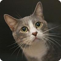 Adopt A Pet :: Spooky - Canoga Park, CA
