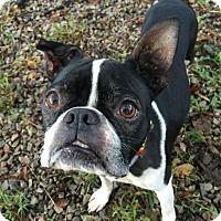 Adopt A Pet :: Stewart - Greensboro, NC
