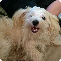 Adopt A Pet :: Leroy - Parsippany, NJ