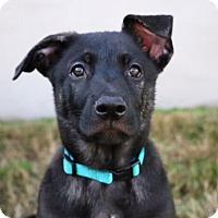 Adopt A Pet :: Carter Beauford - Austin, TX