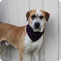 Adopt A Pet :: Ponyboy - Yucaipa, CA