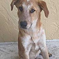 Adopt A Pet :: Purdy - Sarasota, FL