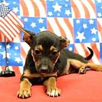 Adopt A Pet :: Rocket - Modesto, CA