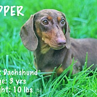 Adopt A Pet :: Copper - Yuba City, CA