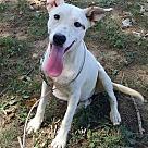 Adopt A Pet :: China