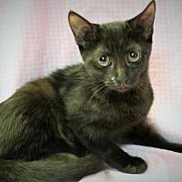 Adopt A Pet :: Rose - Winston-Salem, NC