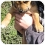 Photo 2 - Shepherd (Unknown Type)/Labrador Retriever Mix Puppy for adoption in Poway, California - Magda