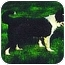 Photo 1 - Border Collie Dog for adoption in Powell, Ohio - Breeze