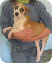 Hound (Unknown Type) Mix Puppy for adoption in Honesdale, Pennsylvania - Patsy